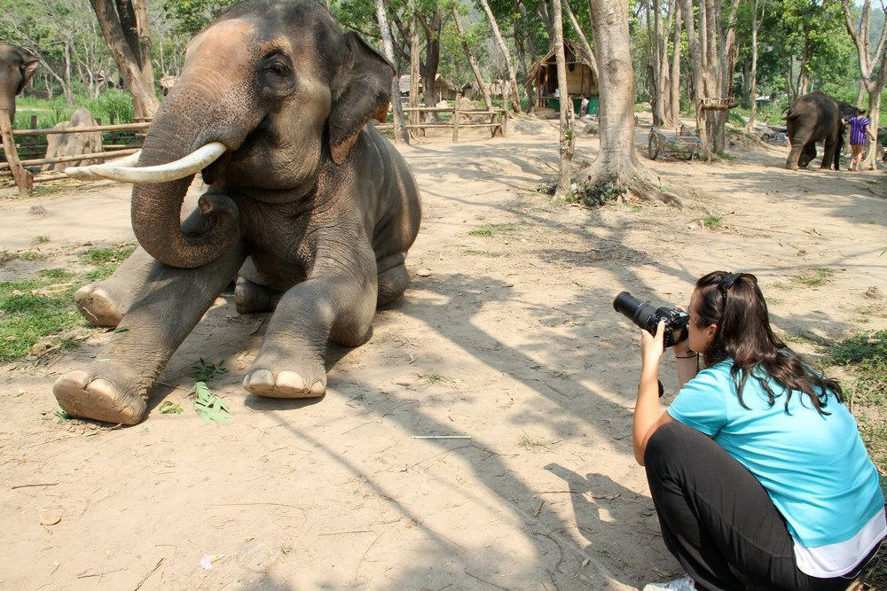 Photographing magnificent pachyderms
