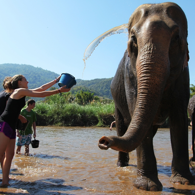 Elephant Nature Park - Thailand 2012