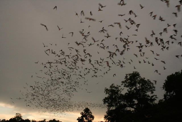 OUR WIND TURBINES MURDER A LOT OF BATS