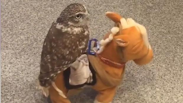 OWL ON TOY HORSE......