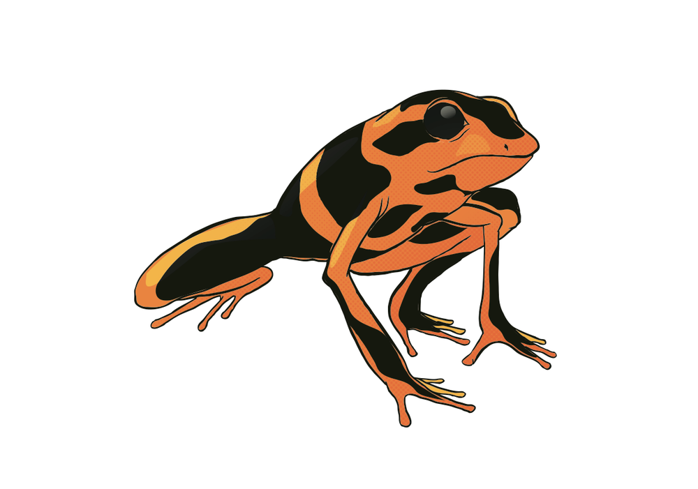 solo frog.png