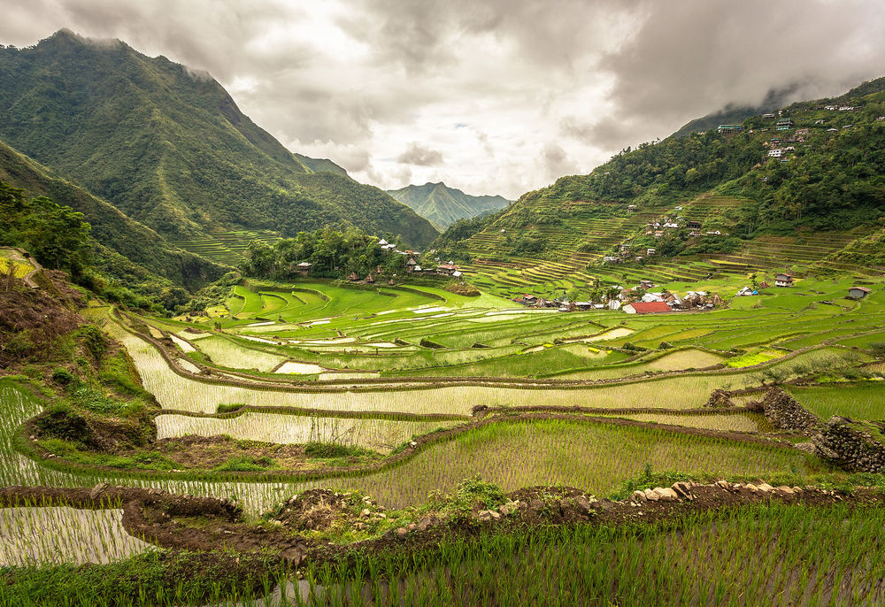 Rice terraces in the Philippines. Photo by Adi.simionov  •   CC BY-SA 3.0