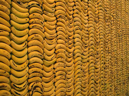 Via hydeordie: Stefan Sagmeister Self-confidence Produces Fine Results Give Stefan Sagmeister 10,000 bananas and some glue, and he'll give you a giant Banana Wall, part of an art installation on Things I Have Learned In My Life So Far exhibition. Titled Self-confidence Produces Fine Results, the Banana Wall is made of real bananas stacked up in a giant wall at Deitch Gallery. In the Banana Wall, Sagmeister used green bananas to create the motto: Self-confidence Produces Fine Results and ripe banana as the background. The interesting thing about this installation is that it changes over time. As the bananas ripen further, the motto will disappear and the background become brownish-yellow. The bananas gradually decay over 24 days of the exhibition. via…