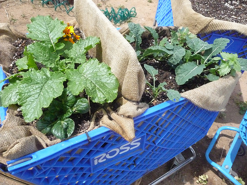 Reposting my  unconsumption  post:             Grocery Getters:  The Farm Proper Plants Real Food in Shopping Carts — FastCompany.com     Alissa Walker writes:      Urban farms are sprouting in vacant lots and forgotten walls all over the country. But a farm in San Diego, California employs another type of abandoned real estate: The shopping cart. Firms Set & Drift and mi-workshop have used a signature blight on the urban landscape to create a mobile garden concept called   The Farm Proper   in the city's Barrio Logan neighborhood.      Abandoned carts gathered from the neighborhood have been lined with burlap sacks donated by a local coffee retailer and packed with plants.  Carts deemed inoperable have been anchored permanently at the space, and in this case, planted into a kind of bean pole teepee. The image of the supermarket staple serving as a planter for fresh food serves up some pretty nice symbolism as well.     It's the meals-on-wheels element that really makes this kind of gardening exciting. One can imagine how banged-up carts could be collected from the streets, brought here for planting and then be wheeled away to permanently park at the homes of deserving families. Another idea, which was already demonstrated at a Farm Proper potluck, could bring healthy lunches to local workers: With the proper combination of crops, these mobile carts could roam the streets as super-fresh, pick-your-own salad bars.
