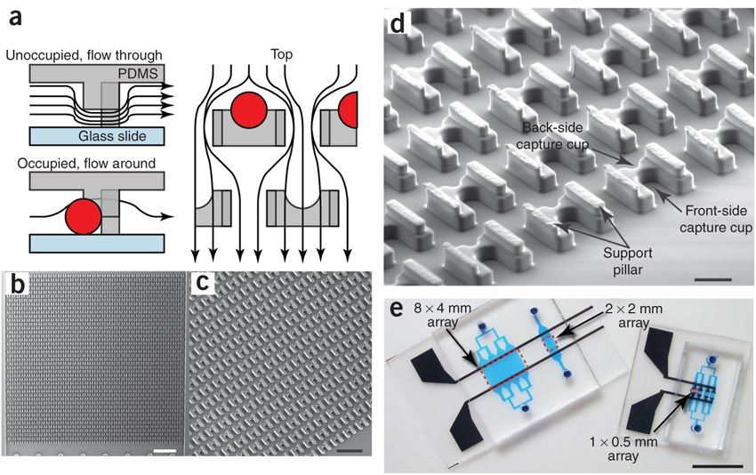 A microfluidic device for cell capture and pairing ( a ) Schematic of the device operation and structure. ( b ) Cell traps. ( c ) Magnified image of the device, showing the densely packed structures. ( d ) Detail of the trap structure ( e ) A 2 × 2 mm array containing ~750–1,200 traps; and an 8 × 4 mm array containing ~6,000 traps. Image courtesy of Nature Methods.