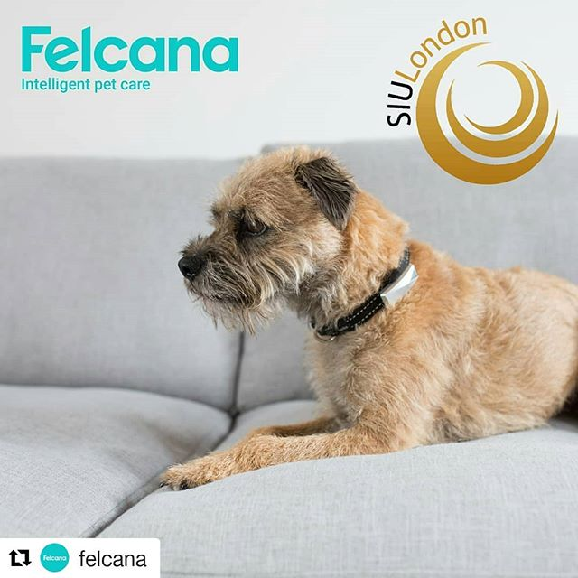 #Repost @felcana (@get_repost) ・・・ Pssst! 👀 Felcana is headlining at Science Innovation Union's Animal Healthcare Revolution event THIS MONDAY. Sign up for free at: ow.ly/DQqV30m25XS and find out about the role of #tech in #animal #healthcare 👆💡 . . . #startup #event #research #animalhealth #technology #eventbrite #science #innovation #union #dogs #cats #electronics #ai #firmware #artificialintelligence #wednesdaynews #updates #cool #instadogs