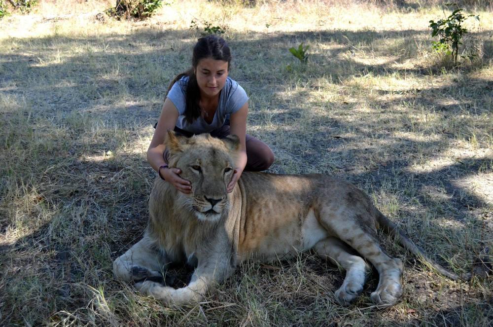 Afrique-Sarah lion 3