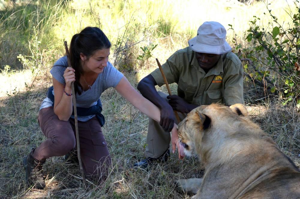Afrique-Sarah lion