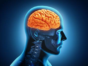 neocortex.jpg