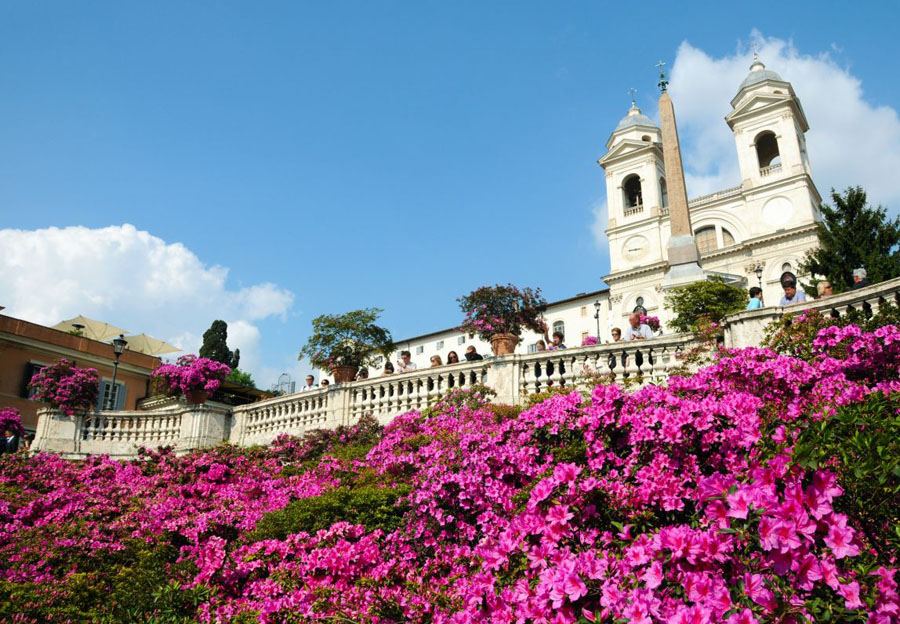 2-Azaleas-on-the-Spanish-Steps-Rome-Purple-Home-News.jpg