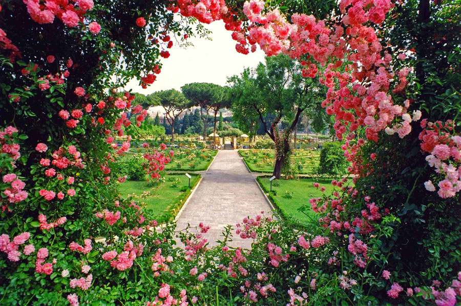 1-Rose-public-garden-of-Rome-Purple-Home-News.jpg