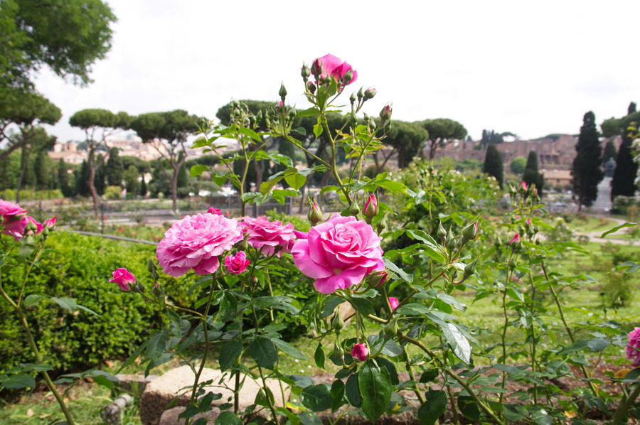 4-Rose-public-garden-of-Rome-Purple-Home-News.jpg