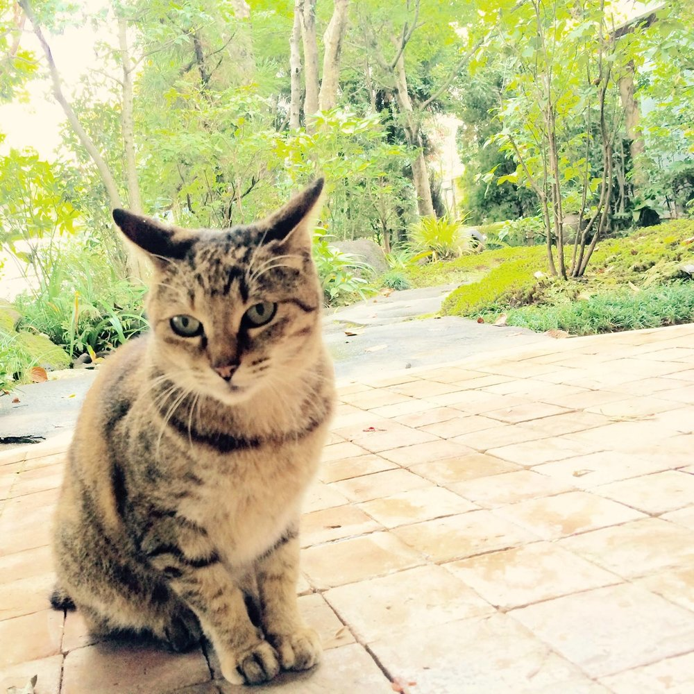 Cats - mascot