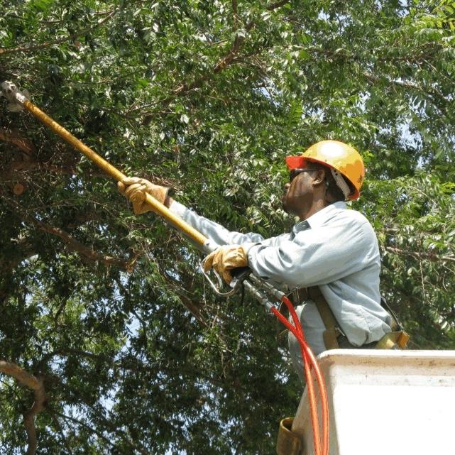 treetrimming3.JPG