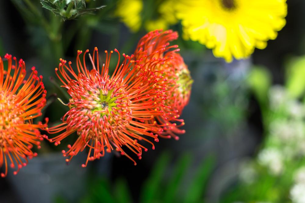 Fleuriste 50mm worked-8.jpg