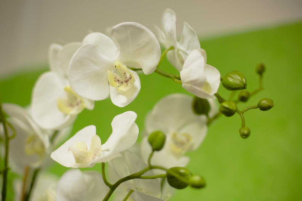 Fleuriste 50mm worked-25.jpg
