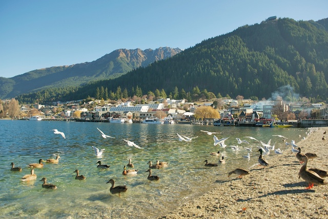 queenstown-new-zealand–pokerstars-snowfest-poker-tournament-scene-lake-birds-ducks-shore-scenery