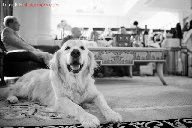 Hong Kong Shatin wedding morning family dog closeup