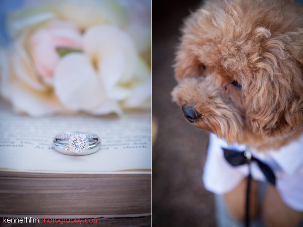 Hong Kong Wedding photography one thirty one wedding rings puppy ringbearer