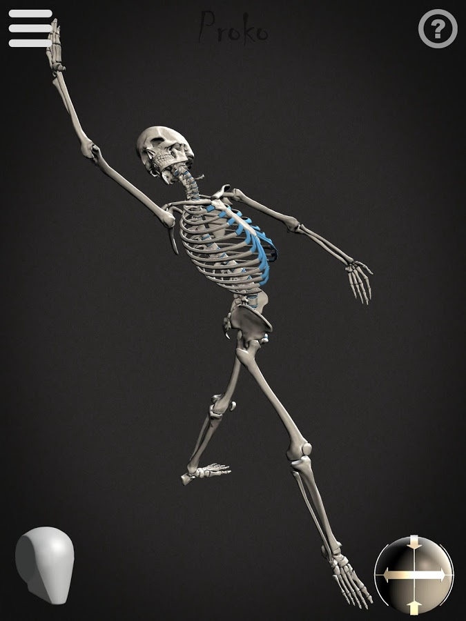 Skelly App Posed Skeleton