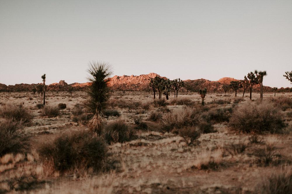 Joshua Tree-1552.jpg