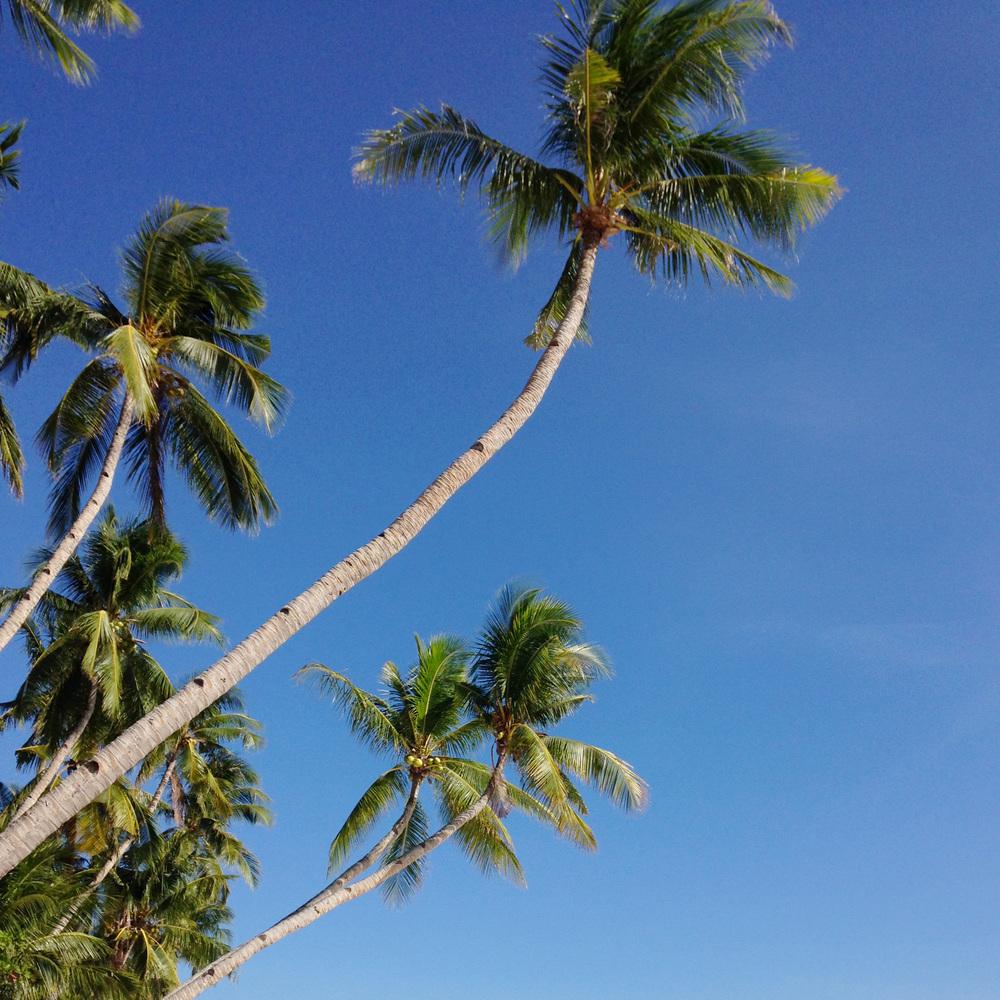 palmtrees.jpg