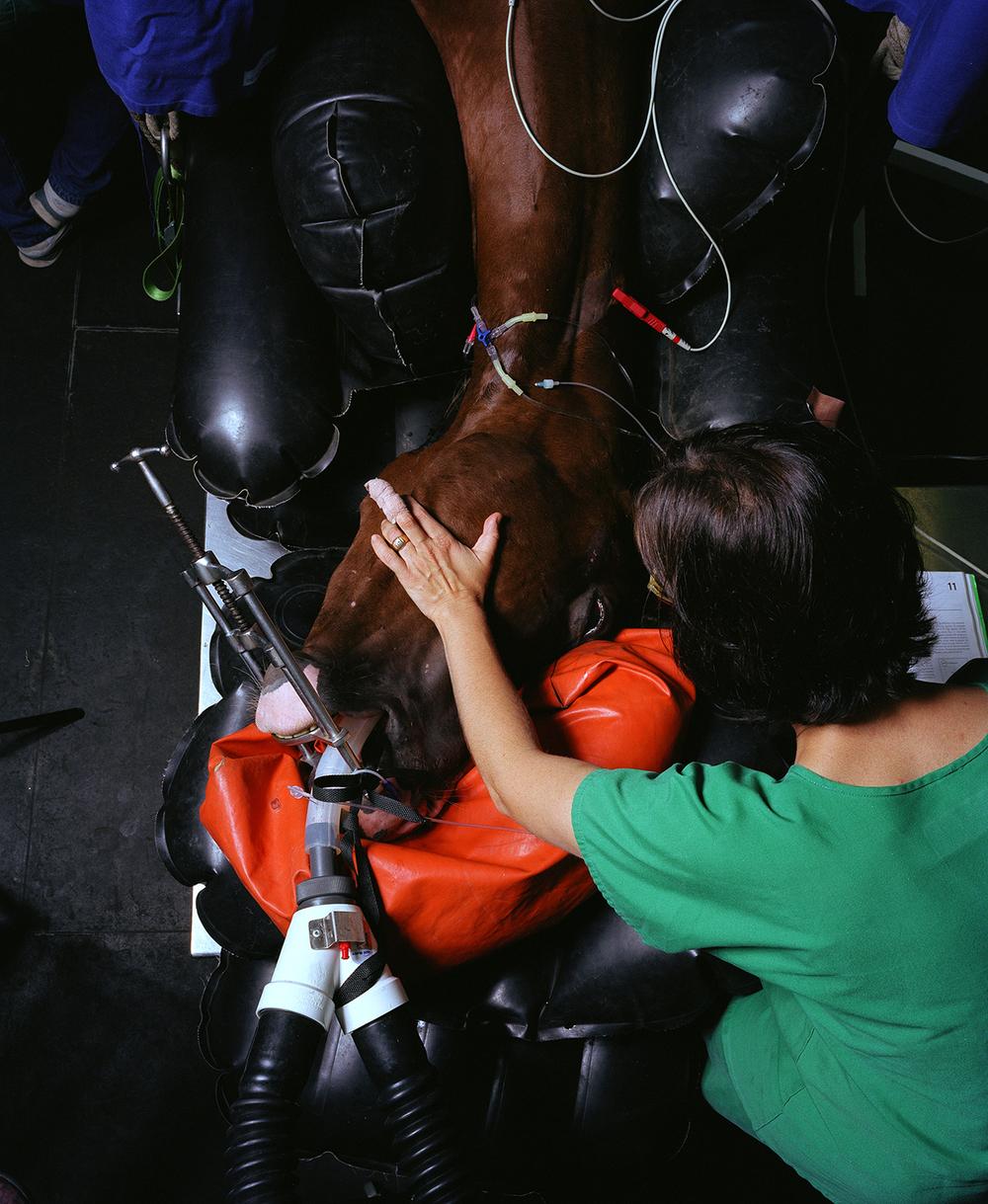 cheval dos.jpg