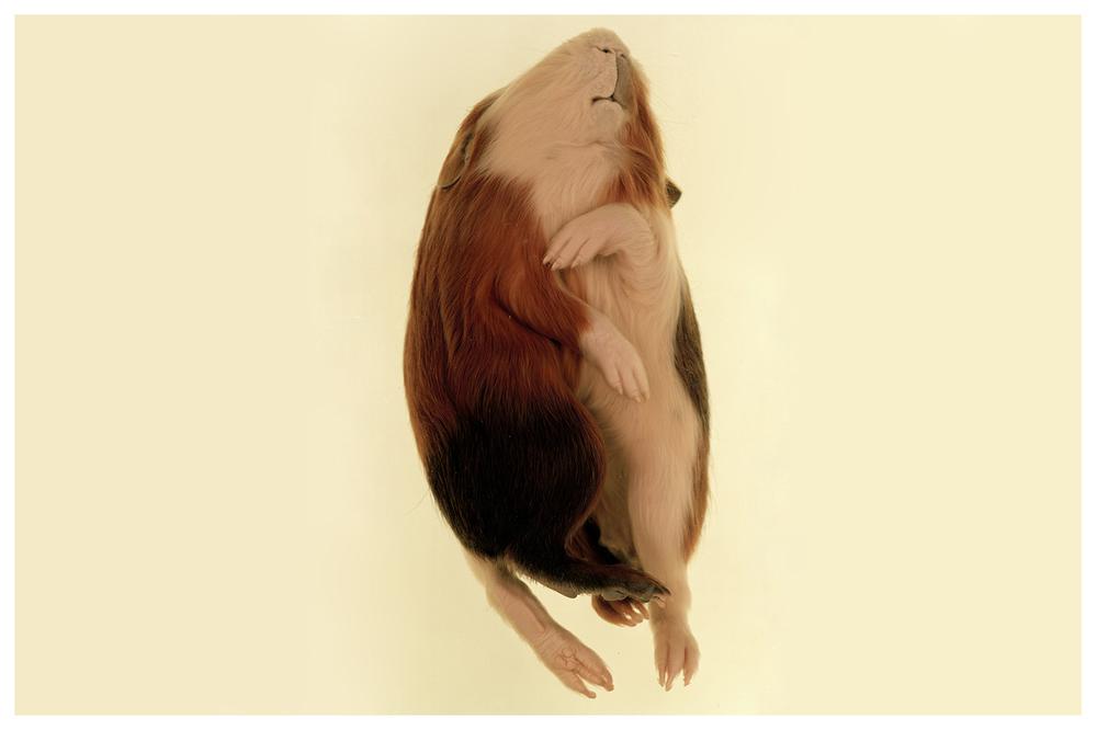 chrysalis9.jpg