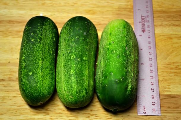 cucumber penis