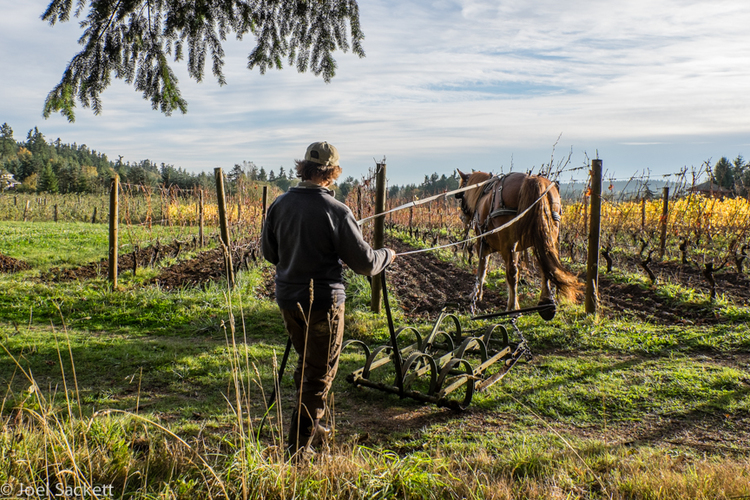 horse and vineyard.jpg