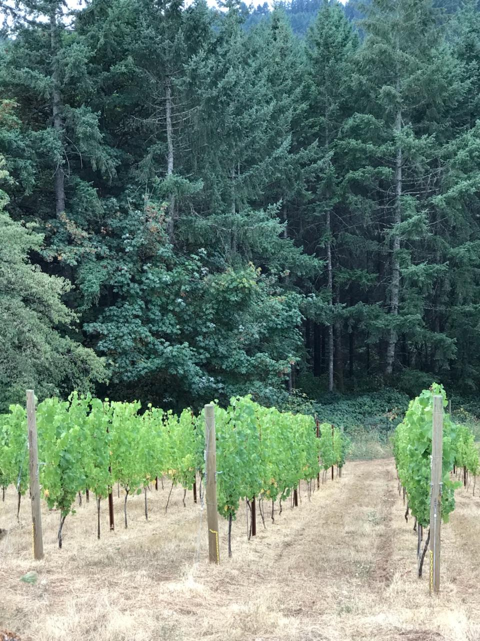 vines and trees.jpg