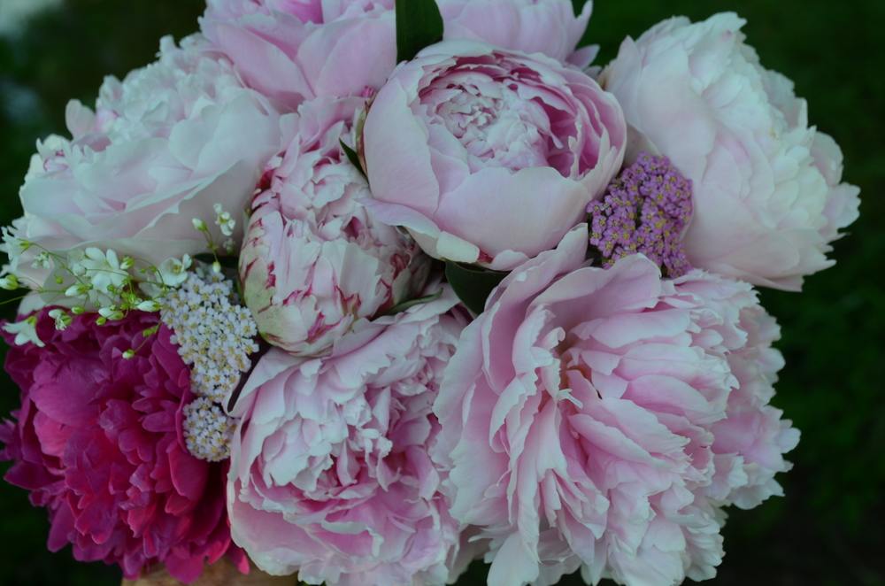 peony bouquet at Hauser Creek Farm