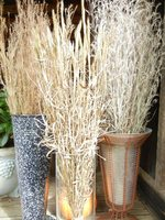native grasses in vases