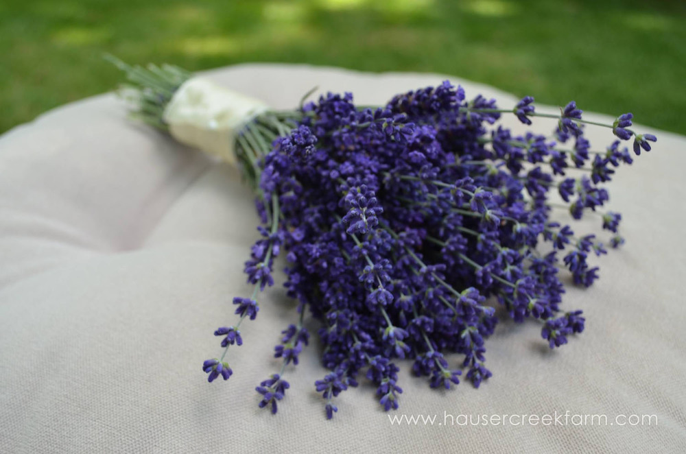 cut-hidcote-lavender-bouquet-from-hauser-creek-farm-nc-also-seen-on-facebook-038.jpg