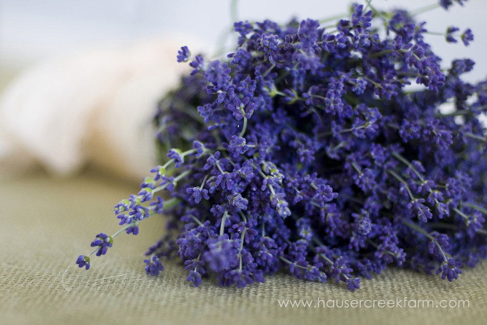 vivid-lavender-bouquet-north-carolina-farm-a-photo-by-ashley-004.jpg