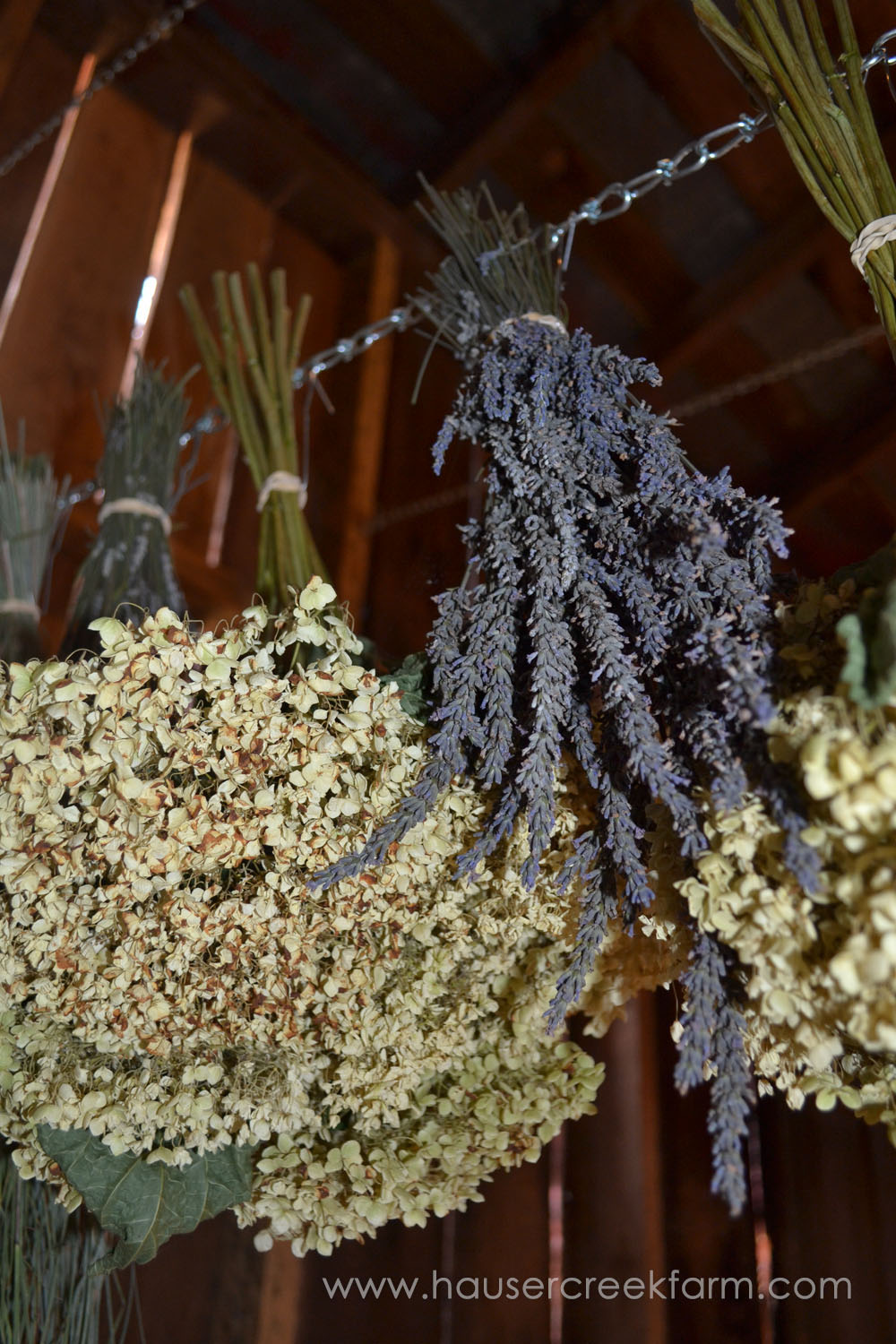 bundles-of-lavender-hanging-upside-down-to-dry-in-barn-DSC_0569.jpg