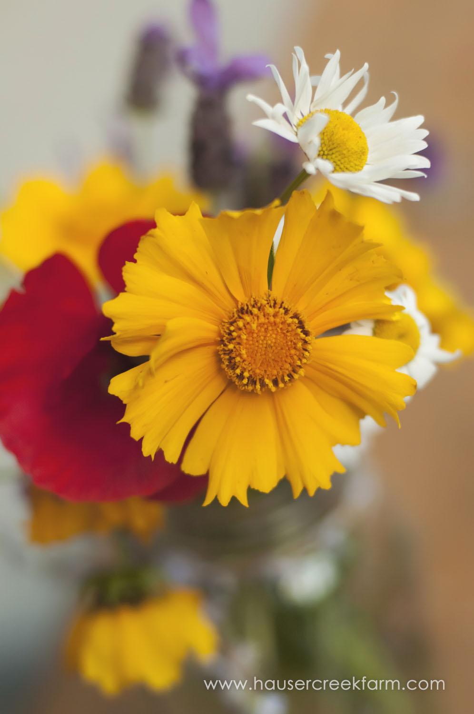 Coreopsis, Poppy & Wild Daisy