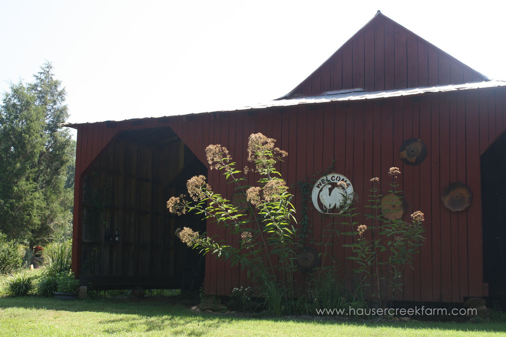 Young crepe myrtles in front of granary at Hauser Creek Farm