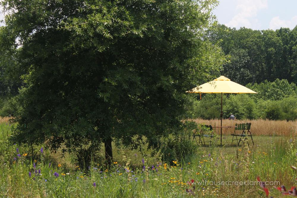 hauser-creek-farm-spring-open-farm-day-melody-watson-photo-1427.jpg