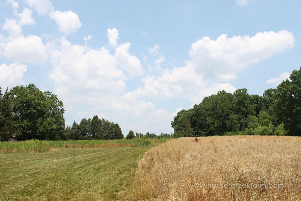 field-open-sky-spring-open-farm-day-melody-watson-photo-1617.jpg