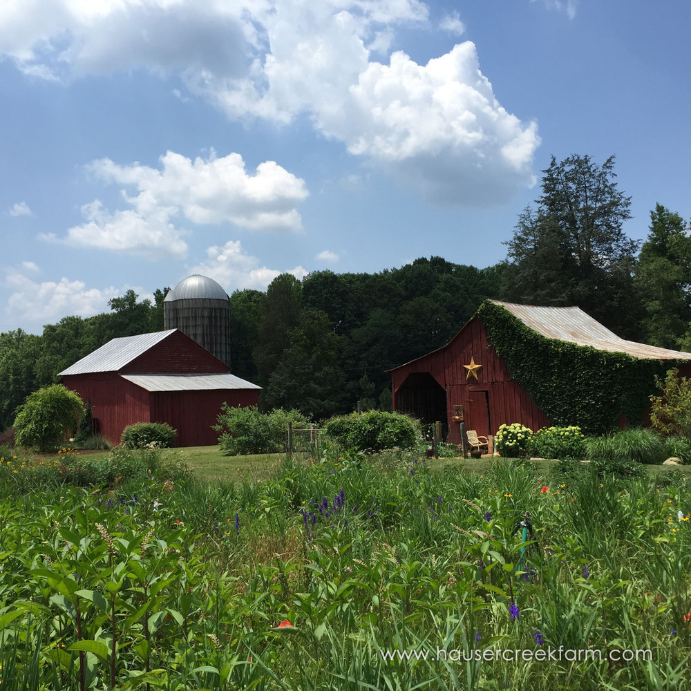 spring-open-farm-day-at-hauser-creek-farm-square-photo-by-melody-watson-7554.jpg