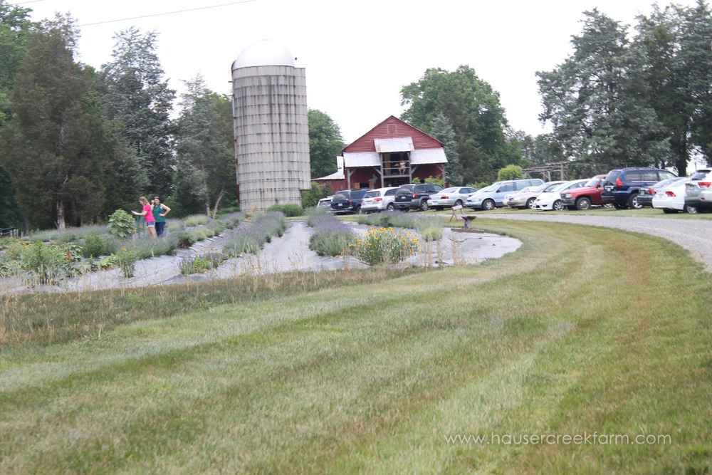cars-and-guests-at-hauser-creek-farm-spring-open-farm-day-1670.jpg