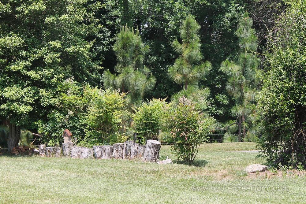 cut-logs-pine-trees-and-woods-lush-green-nc-farm-melody-watson-photo-IMG_1428.jpg