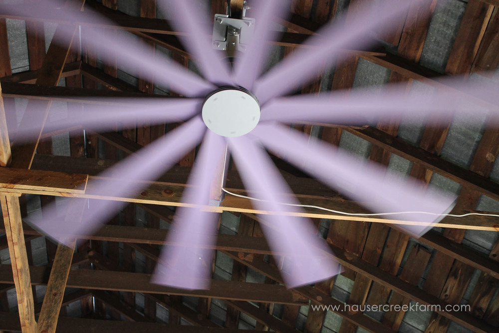 Purple fan spinning beneath barn rafters