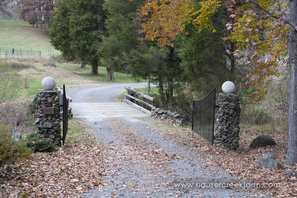 fall-leaves-at-entrance-to-hauser-creek-farm-photo-by-chris-fowler-1151color.jpg
