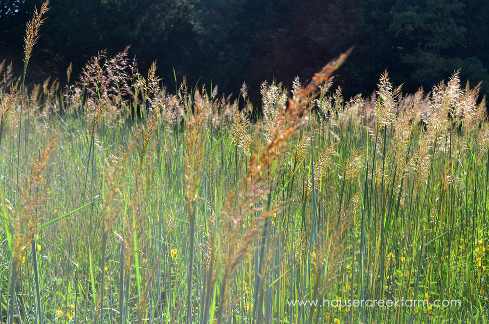 sept bluestem grass 001.JPG