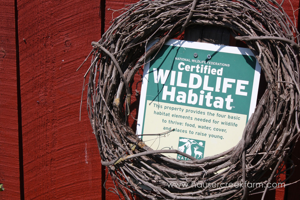wreath-of-vines-surrounding-certified-wildlife-habitat-sign-north-carolinaIMG_0625.jpg