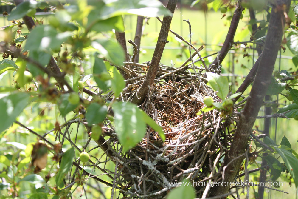 bird-nest-at-hauser-creek-farm-photo-by-annie-segal-4406.jpg