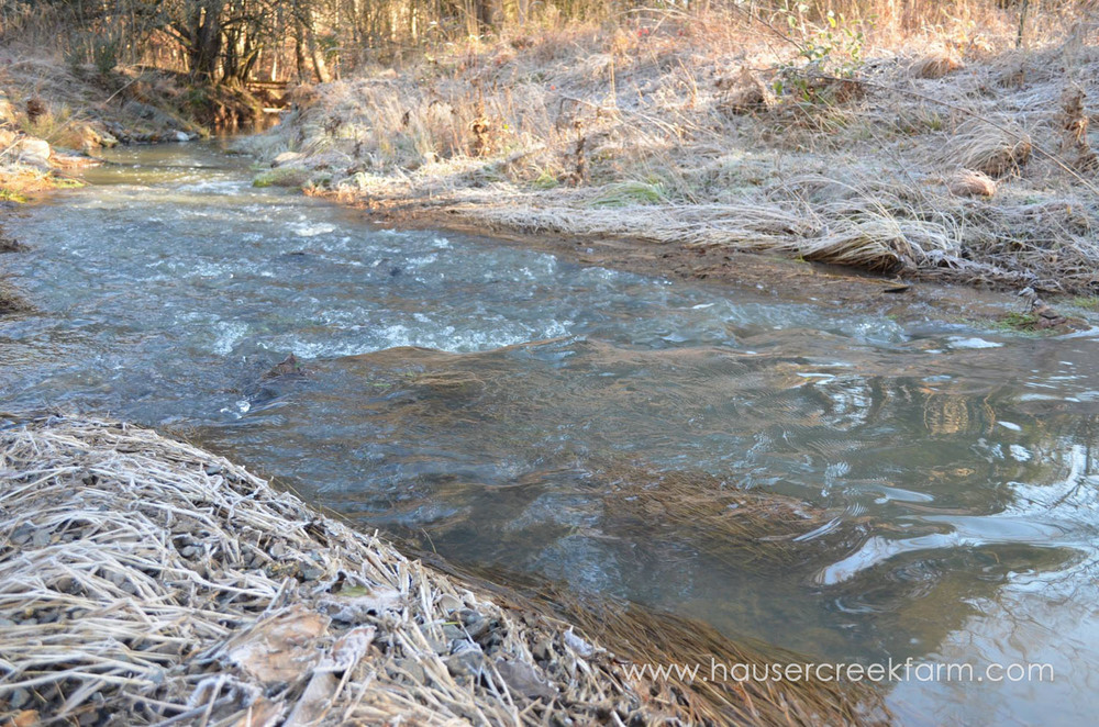 hauser-creek-in-winter-with-frost.jpg