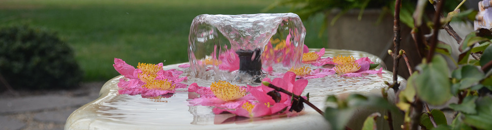 Pink, white and yellow flowers in water fountain at Hauser Creek Farm